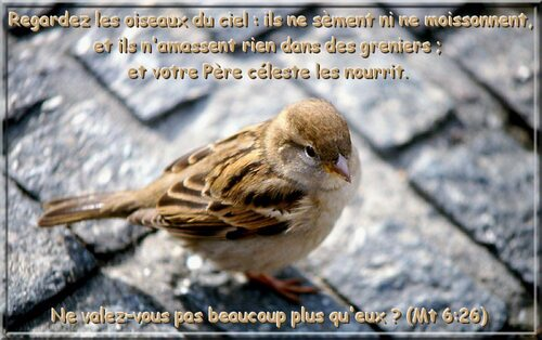 Images Psaumes 4