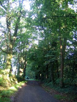 Chemin d'Arles 2008 - Lescar (21km)