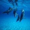 Danse-avec-les-dauphins-Dance-with-dolphins.jpg