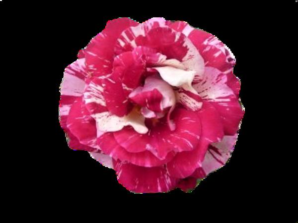 Une fleur / 5