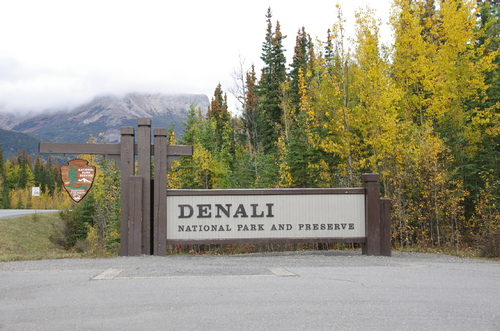 Jour 13 - Denali National Park