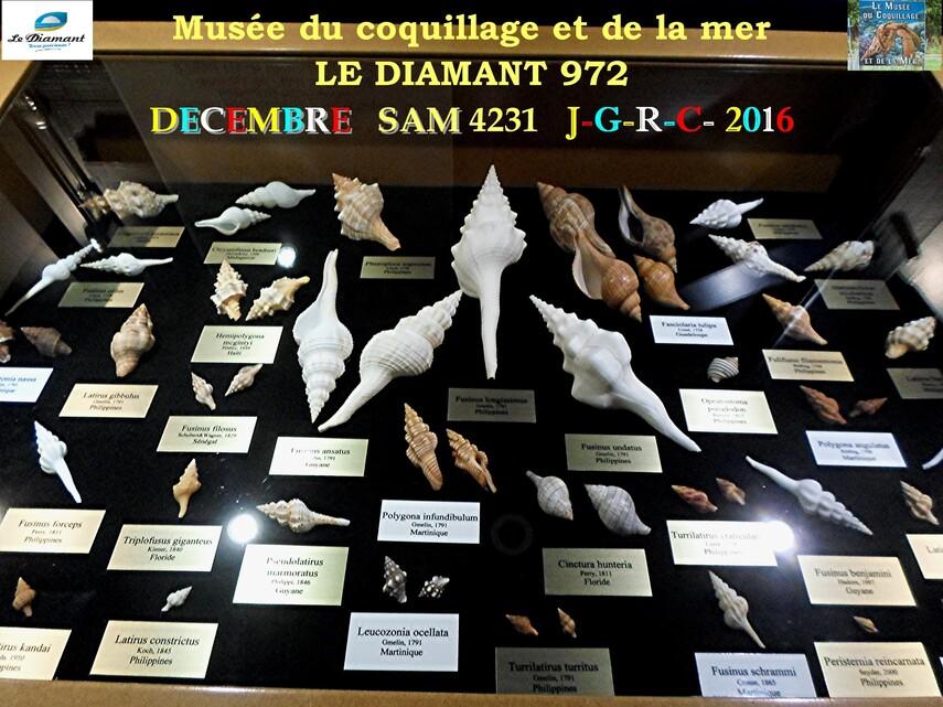 Le monde des coquillages de mer   2/5  17/29    LE DIAMANT MARTINIQUE       D    20/05/2018