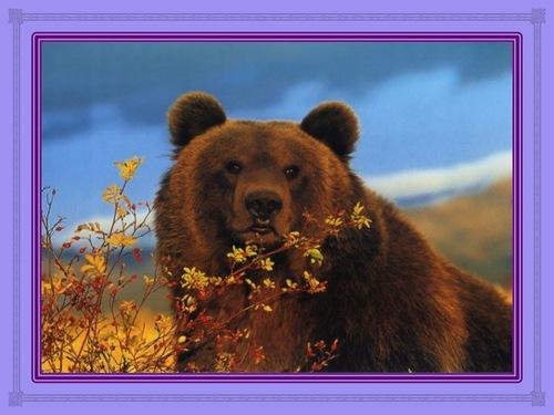 L'ours et la chenille