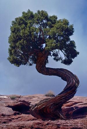 Un arbre ... un homme ...