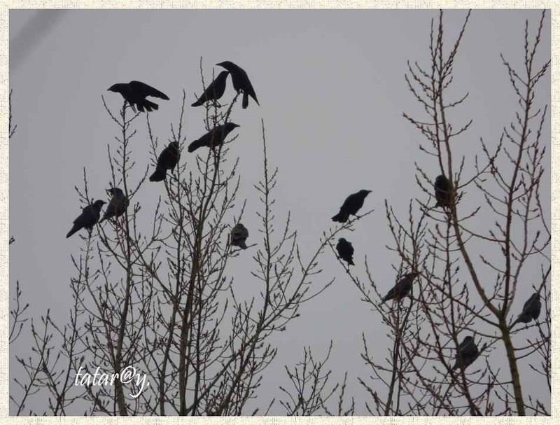 Dans le ciel gris .....