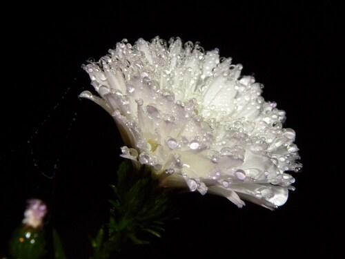 Mon jardin sous la pluie