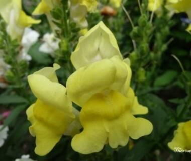 Fleurs d'automne (36)