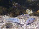 L'aquarium La Rochelle
