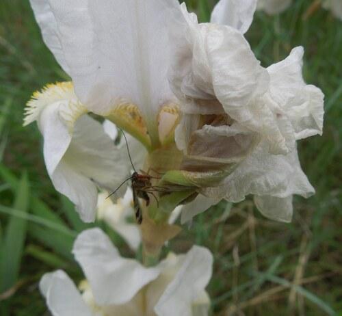 Une fleur visitée