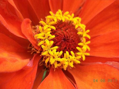 Floraison d'Août