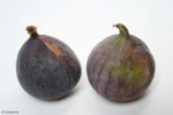 figues-s5310