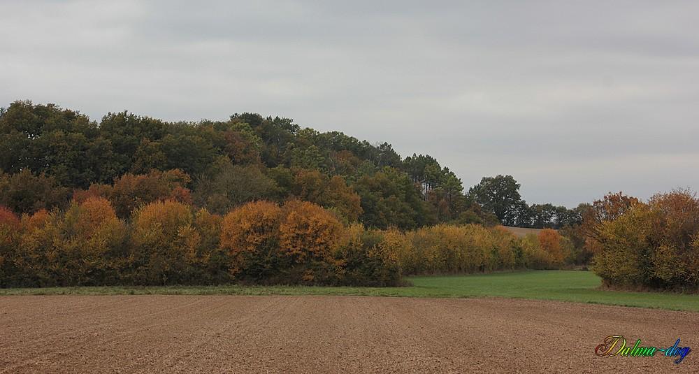couleurs d'automne!!!!