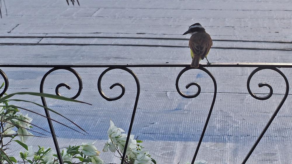 des oiseaux dans la ville 20/1