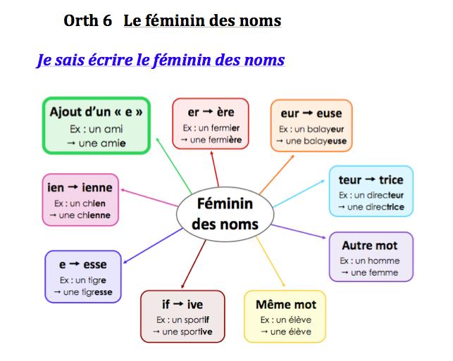 le féminin des noms et des adjectifs cm2