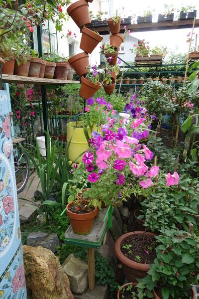 Le jardin de Madame et Monsieur B  2/2