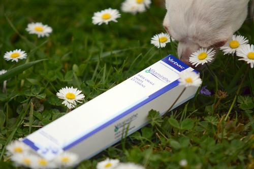Produits-Veto : Un début de printemps avec Vitaminthe