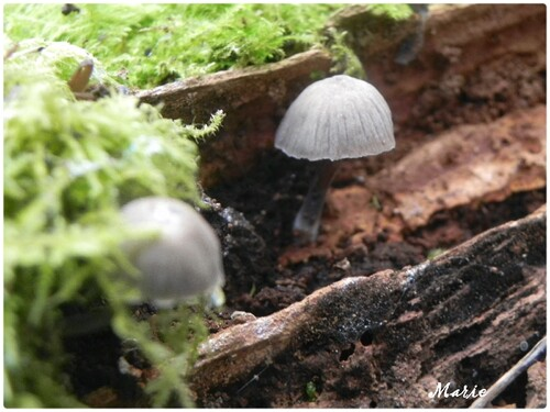 le temps des champignons