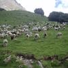 Pastoralisme-TranshuRando-Estaing2007-Vallee3.jpg