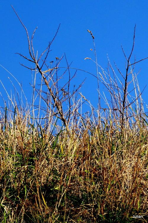 Ciel bleu et herbes ou branches