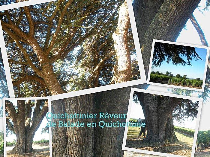 quichottinier2.jpg