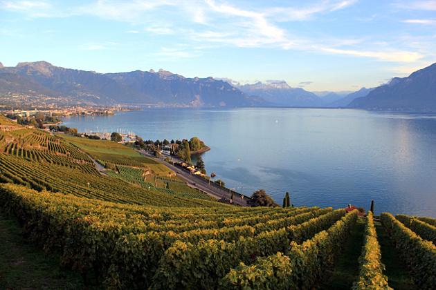 Vignobles sur le Lac Léman