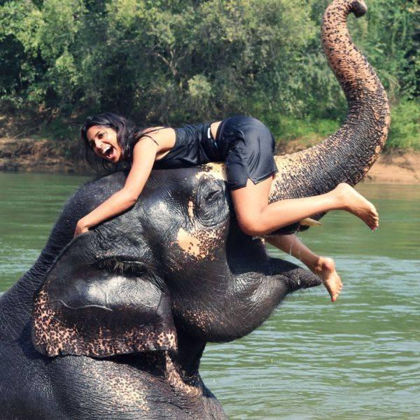 ELEPHANTS  et  AUTRES
