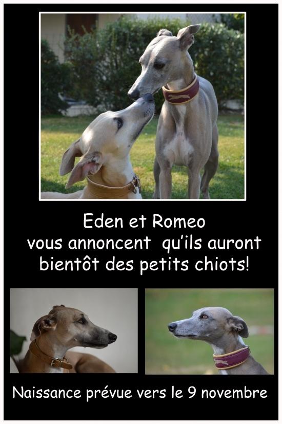 Faire part Eden et Romeo