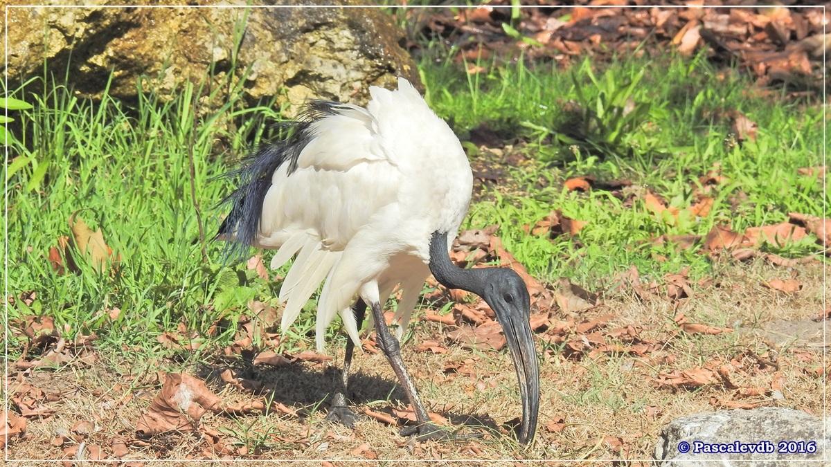 Zoo du Bassin d'Arcachon - Août 2016 - 11/15