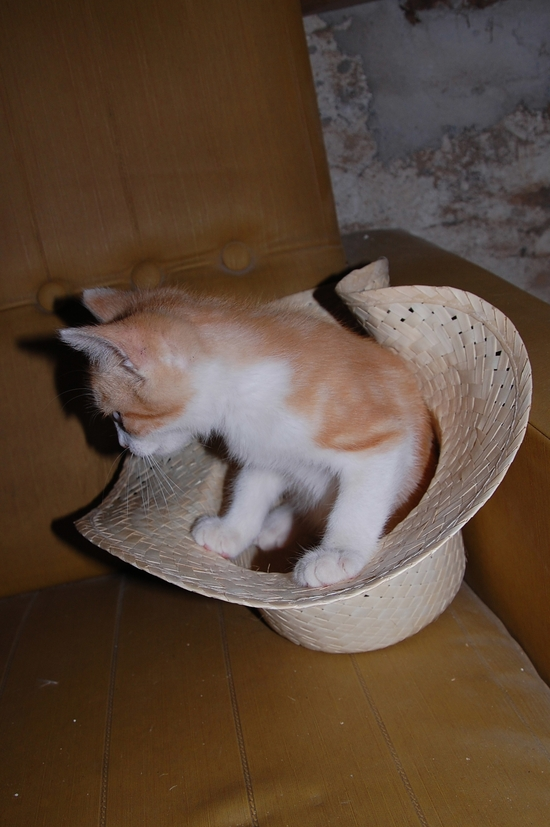 chaton12juilletj