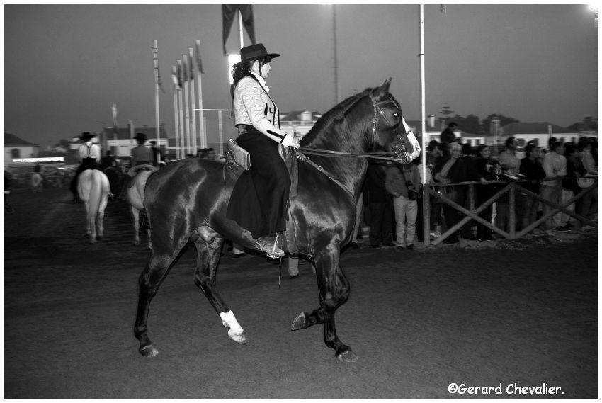 Feira nacional do cavalo - Golegã - Portugal #6
