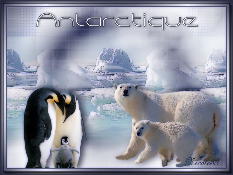 Antarctique - Page 2 200120123215165297