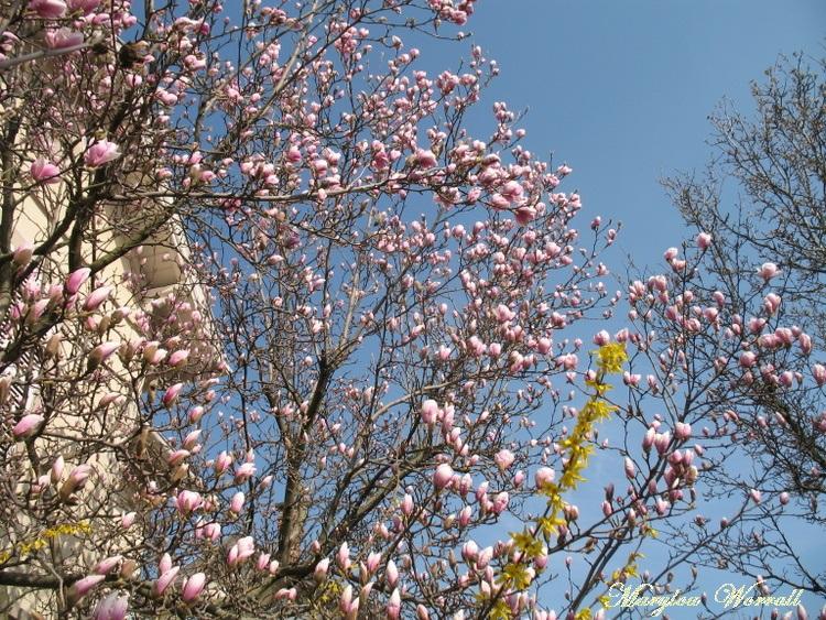 Le printemps dans ma rue