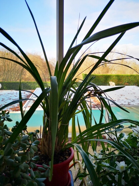 Naissance d'une Phalaenopsis spp...