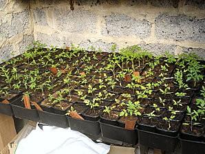 plants 011