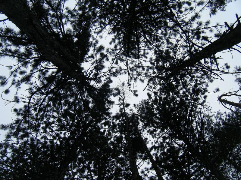 Photo_038