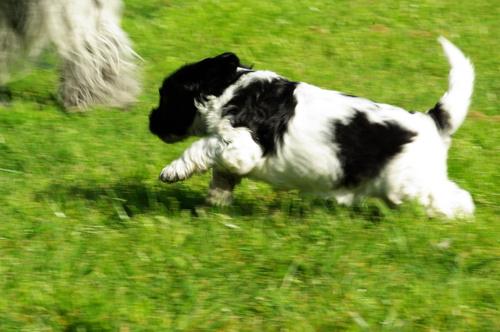 Et c'est parti pour une course folle dans l'herbe