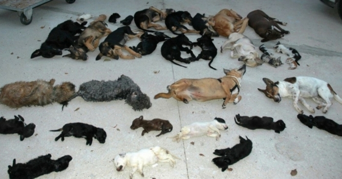 Scandale en Espagne : une association de protection animale assassine 2200 chiens et chats