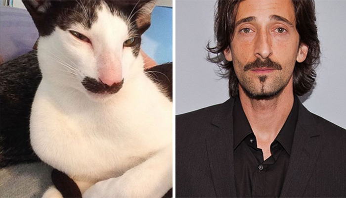 cat-looks-like-other-thing-lookalikes-celebrities-40__700