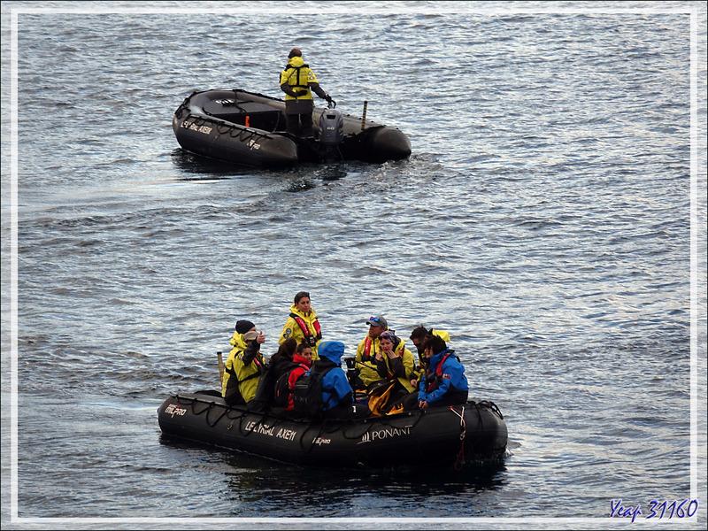 5 mars 2019 : nous mouillons à South Harbour en vue de notre premier débarquement - New Island - Falkland - Grande Bretagne