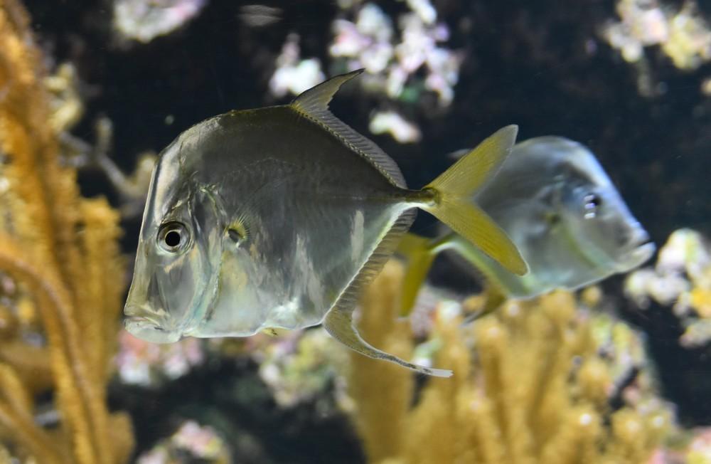 Quelques poissons, à l'Aquarium de La Rochelle...