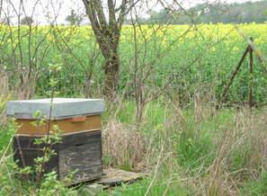 Mon rucher en activité!