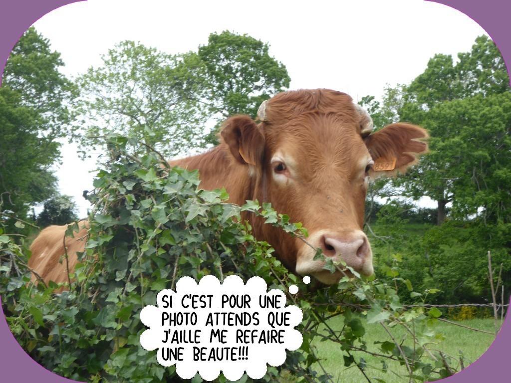 LA DERNIÈRE PAGE D'HUMOUR DU MOIS