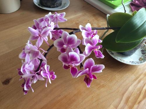Les Orchidées !!!