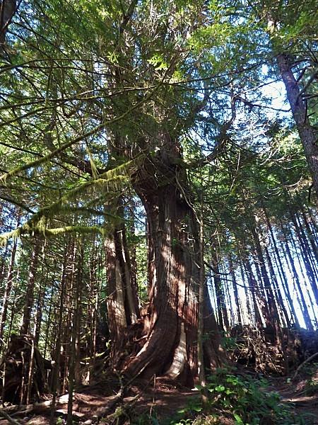 Jour 26 Tofino rainy forest 3b