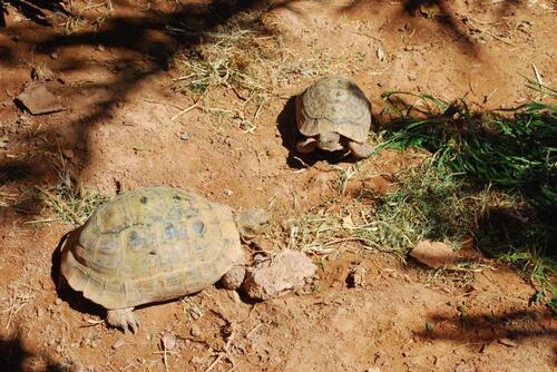 Les tortues sont toujours là.