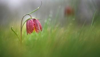 La nature toute simple dans toute sa beauté ...