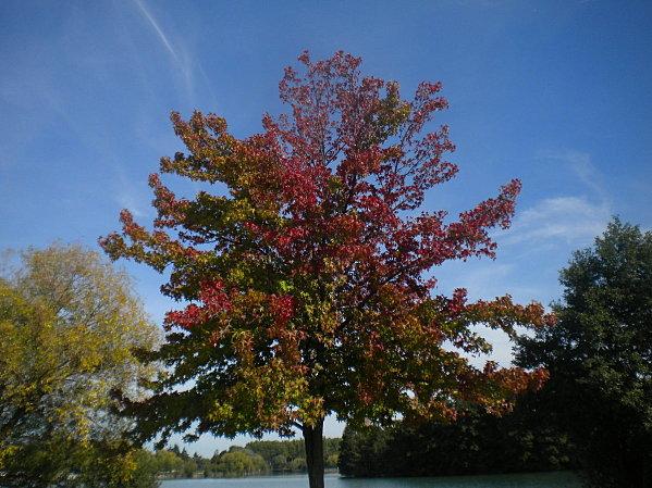 automne 2010 097