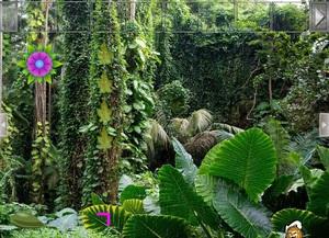 Jouer à Amazon rainforest escape