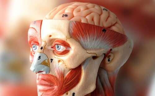 Top 7 des technologies pour améliorer notre cerveau