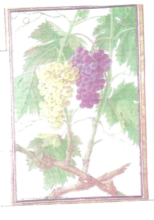 Les vins autour de 5 euros
